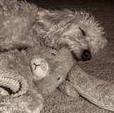 Teig Sleeping with Bunny Royalty Free Stock Image