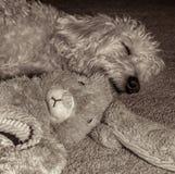 Teig som sover med kaninen Royaltyfri Bild