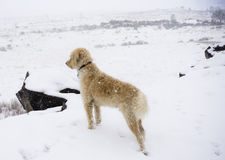 Teig watching the Snow Fall on South Table mountain Stock Photo