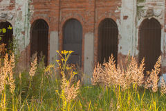 Teil alte ruinierte Fassade und belichtetes Gras Stockbilder