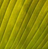 Teil des grünen Blattes Lizenzfreies Stockfoto
