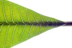 Teil des grünen Blattes Stockfoto