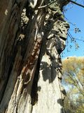 Teil des Stammes des trockenen Holzes lizenzfreies stockbild