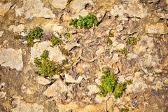 Teil einer Steinwand Hintergrund Stockfoto