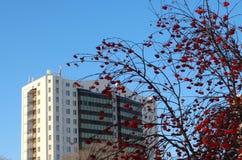 Teil eines hohen modernen Gebäudes gegen einen blauen Himmel mit roten Ebereschenbeeren stockbild