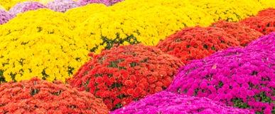 Teil Sun und Schatten-Blumen Stockfotos