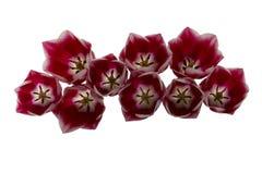 Teile der Tulpen stockfoto