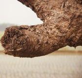 Teile eines einzigartigen Fotos des alten Baums stockbild