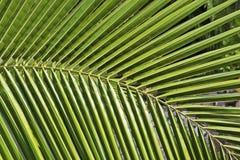 Teilweise Ansicht eines Palmblattes Lizenzfreies Stockfoto