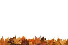 Teilweises Feld des Herbstlaubs Stockfoto