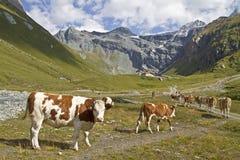 In Teischnitz valley in East Tyrol Stock Images