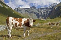 In Teischnitz valley in East Tyrol Stock Photos