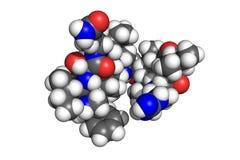 Teixobactin, space-filling model Stock Photo