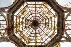 Tejado de la pérgola abovedada con Autumn Crimson Glory Vine imagen de archivo