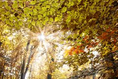 tejado de las hojas Imagen de archivo libre de regalías