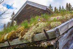 Tejado de Noruega en Escandinavia imagenes de archivo