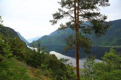 Tejado de Noruega en Escandinavia fotografía de archivo