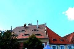 Tejado observado en Sibiu, capital europea de la cultura por el año 2007 Fotografía de archivo