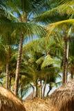 Tejado tropical y palmera del refugio de la playa que toman el sol en sol caliente Fotografía de archivo