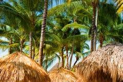 Tejado tropical y palmera del refugio de la playa que toman el sol en sol caliente Imagen de archivo libre de regalías