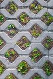 Tejas de la calle con las células para el crecimiento de la hierba foto de archivo libre de regalías