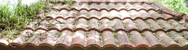 Tejas de tejado con las malas hierbas cubiertas Fotografía de archivo libre de regalías