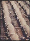 Tejas de tejado en un día escarchado Imagen de archivo
