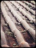 Tejas de tejado en un día escarchado Imágenes de archivo libres de regalías