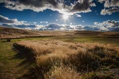 Tekapo Nya Zeeland Arkivbilder