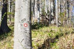 Teken voor weg op een boomboomstam in bos Royalty-vrije Stock Afbeelding