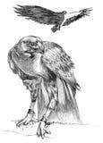 Tekening van Adelaars stock illustratie