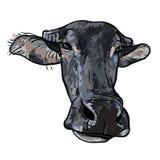 Tekening van buffelshoofd Royalty-vrije Stock Foto's