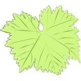 Tekening van een groen blad van druiven Stock Afbeeldingen