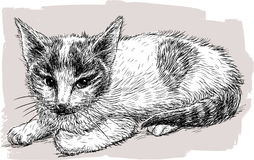 Tekening van een zwart-wit katje Stock Foto