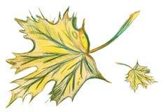 Tekening van groen esdoornblad Royalty-vrije Stock Fotografie