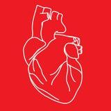 Tekening van Menselijk Hart Stock Afbeeldingen