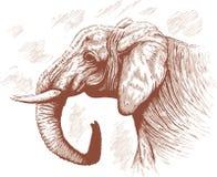 Tekening van Olifant. Stock Fotografie