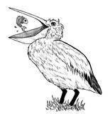 Tekening van pelikaan met vissen Stock Afbeelding
