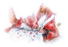 Tekening van rode vogels op takken Stock Afbeeldingen
