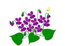 Tekening van viooltjes Royalty-vrije Stock Afbeelding