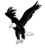 Tekening van vliegende kale adelaar Stock Illustratie