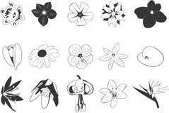 Tekeningen van Bloemen Stock Afbeelding