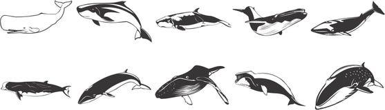 Tekeningen van walvissen Stock Afbeeldingen