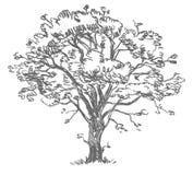 Tekeningsboom uit de vrije hand Royalty-vrije Stock Afbeeldingen