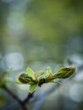 Tekens van de lente stock foto