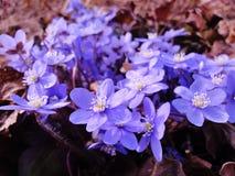 Tekens van de lente stock fotografie