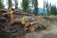 Tekens van ontbossing in Brits Colombia Stock Foto's