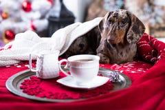 Tekkel en kopkoffie, Kerstmisochtend stock afbeeldingen