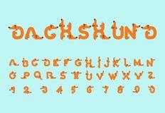 Tekkeldoopvont Hondalfabet Het van letters voorzien huisdier ABC-huisdier Stock Fotografie