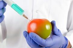 Teknikeren använder en injektionsspruta Genetisk ändring av frukter och grönsaker Arkivfoto